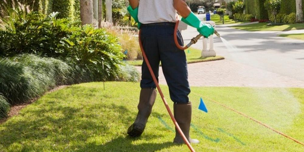 Why Your Lawn Needs Pre Emergent Weeds Control